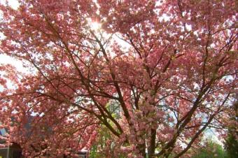 Die Anlage im Frühling