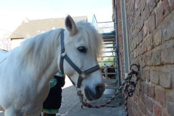 Pony Bobby, Gut Rodderhof