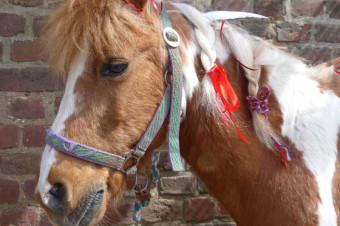 Pony Cheyenne, Gut Rodderhof